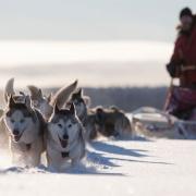 Dogsledding tour with Husky's
